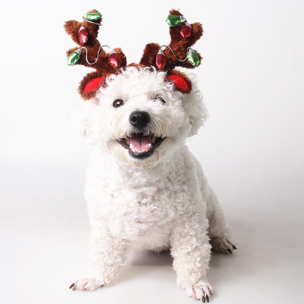 Cute pet Cat Dog Christmas Elk Antlers ...