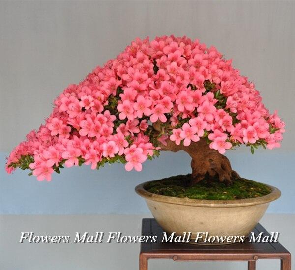flores para macetas. best flores de invierno para macetas with