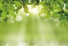 Laeacco Galho de Árvore Luz Do Sol Luz Bokeh Cenário Fotografia Bebê Fundos Fotográficos Personalizados Backdrops Para Estúdio de Fotografia