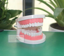 Oral Cavity Model,Oral Care Model,Oral Teaching Model,Tooth Model