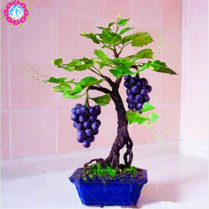 Detail Feedback Questions About 50pcs Grape Miniature Grape Vine