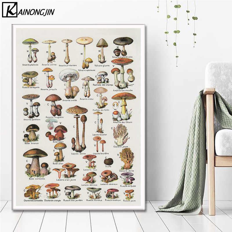 Sanat Posterleri Mantar Grafik Biyoloji Egitim Posterler Ve