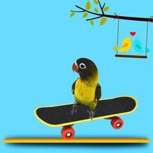 Питомец Попугай Птицы игрушки забавная интеллектуальная игрушка для скейтборда подставка окунь игрушка для попугайчика Петухов аксессуары для обучения птиц 23