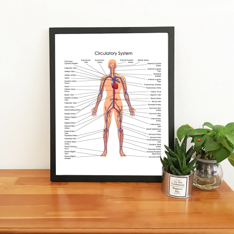 Human Body Circulatory System Diagram Poster Canvas Prints Medical Education Chart Of Biology Painting Doctor Office Wall Decor