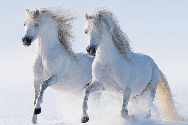 Diy Frame 2 White Horses Running Wild Animal Nature Art Silk Fabric
