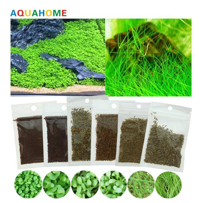 aquarium decoration artificial aquarium plants seed Big leaves/small leaves/Lucky grass/Love grass/Calf grass/Big cow grass/10g