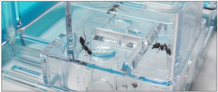 simple-ant-nest (10)