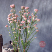 Millet Imported Dried Flowers Light Pink Flowers Flower Material Shooting Props Guest Rooms Bedroom Balcony Cafes