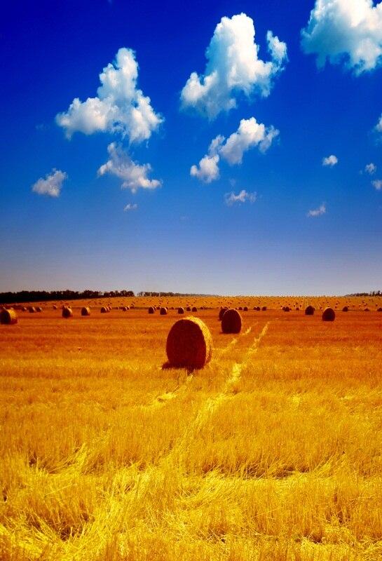Laeacco Rural Farm Field Wheat Hay Bale Landscape Photography Backgrounds Vinyl Background For Photo Studio Custom Backdrops