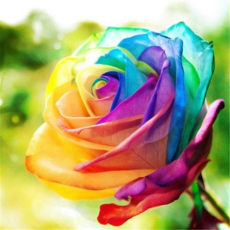 Popular rainbow rose plant buy cheap rainbow rose plant for How to plant rainbow rose seeds