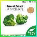 Brócolis extrato GMP HPLC extrato de brócolis Sulforaphen Anti câncer sulforaphen 600 g/lote
