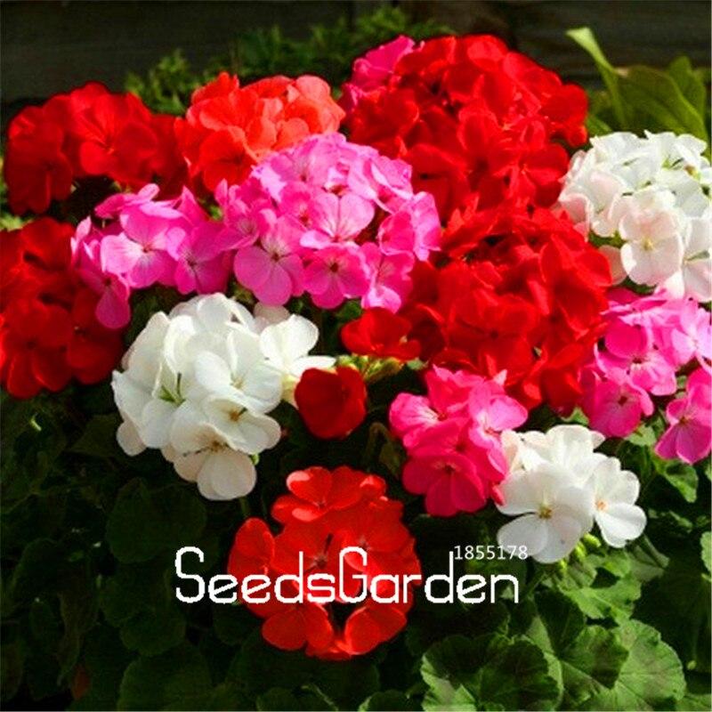 Цена семена цветов