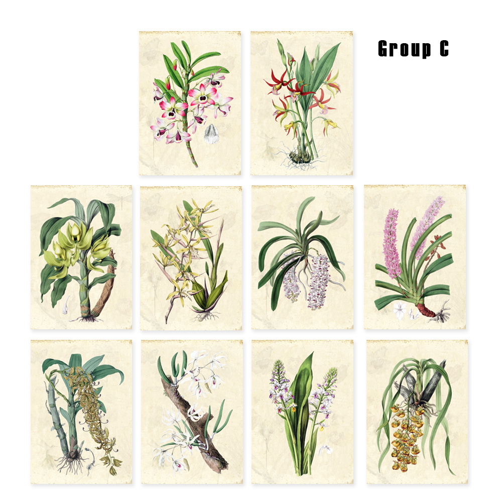 Vintage orchids art Print Set SET of 10 Art Green plants foloral Farmhouse wall decor unframed image