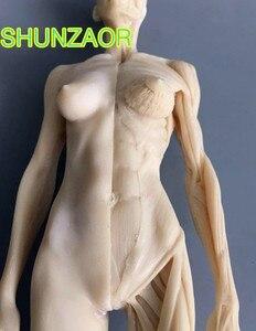 Image 3 - 30cm blanc humain femelle modèle anatomie crâne tête Muscle os artiste médical dessin squelette à vendre