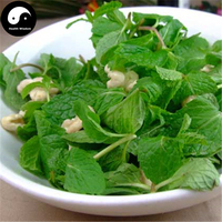 Buy Chinese Herb Nepeta Cataria Seeds 240pcs Plant Vegetables Mint Grass Grow Vanilla Peppermint