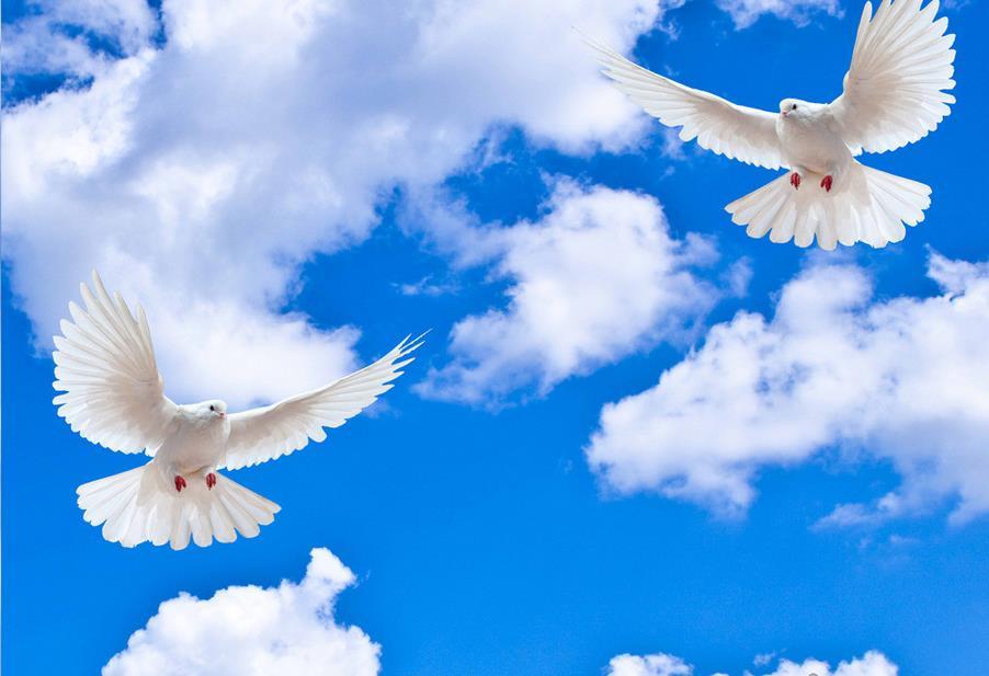 картинки небо с облаками и голубями возможность создать
