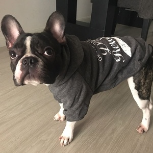 Image 5 - NEW Pet Clothes Dog Hoodies Spring Autumn Leisure Dog Sweatshirts For Small Cat  Large Dogs XS to XXXL