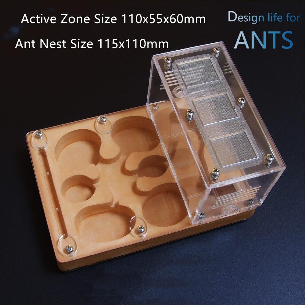 flat-ant-nest (7)