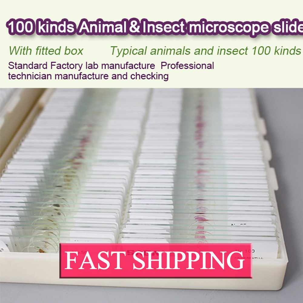 Education aid  100 kinds animal insect histology microscope slides set high quantity histology microscope prepared slides set with 181pcs