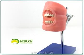 ENOVO Dental dentists prepare dental practice model for dental practice