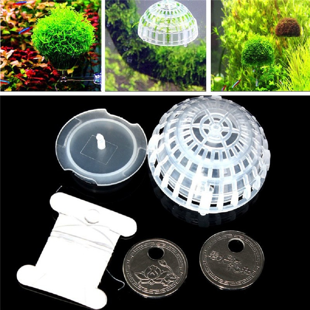 Buy aquatic mineral nature water live for Plastic floating pond plants