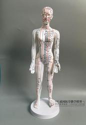 Corpo humano acupuntura modelo feminino meridianos modelo gráfico base de livros 48cm