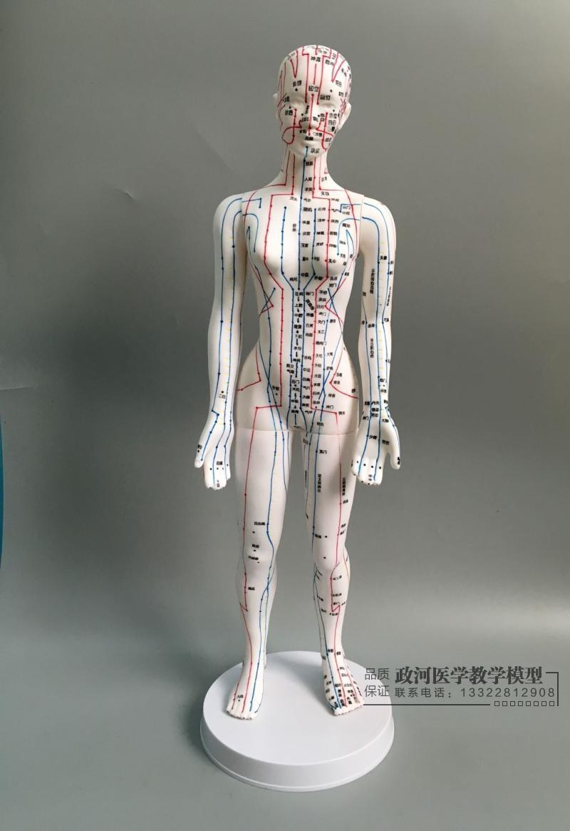 Human Body Acupuncture Model Female Meridians Model Chart Book Base 48cm