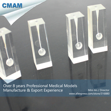 CMAM-TOOTH07 Transparent Unstained Root Canal Endodontic Tooth Block,  Medical Science Educational Teaching Anatomical Models