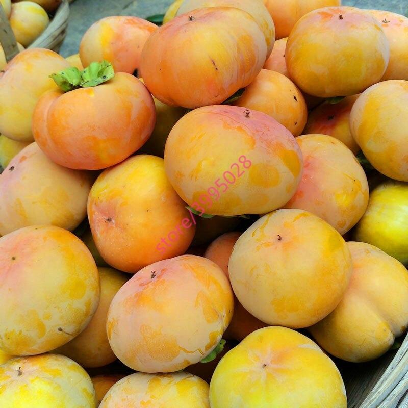30 Persimmon Seeds, Diospyros Kaki, Exotic Bonsai, Beautiful & Delicious Fruit Tree, Fruit seeds for home garden plants