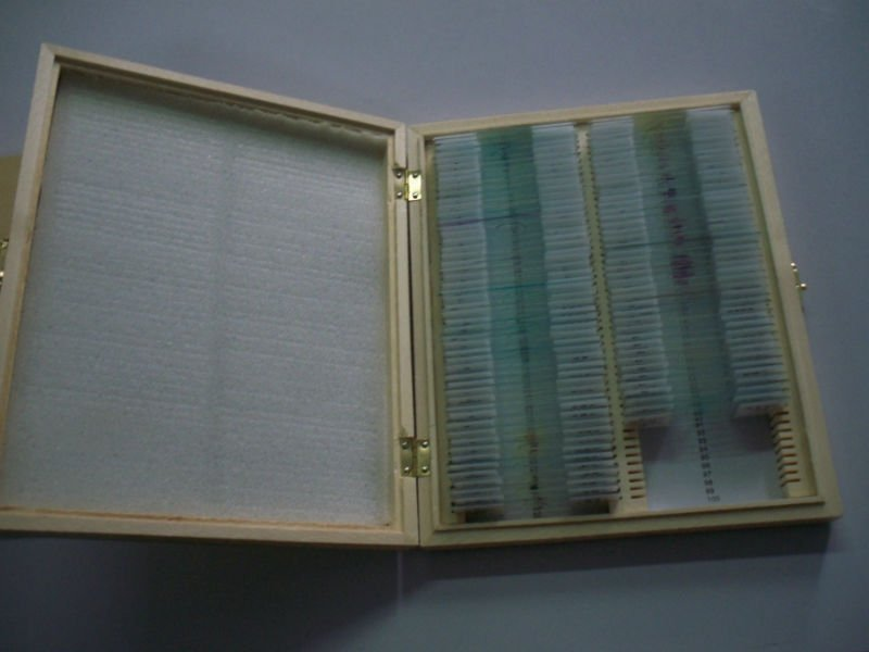 91 Items biological prepared slides high quantity microscope embryology prepared slides