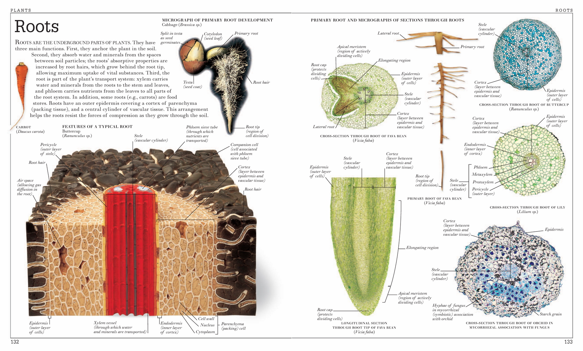 Vintage Plants Encyclopedia Poster Roots Anatomy Classic Canvas ...