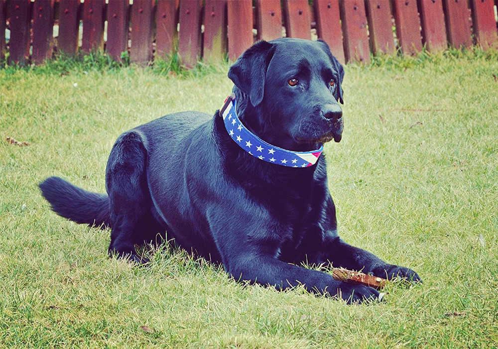 Нейлоновый ошейник для собак регулируемый, принт с американским флагом, быстросъемный ошейник для щенков для маленьких и средних собак