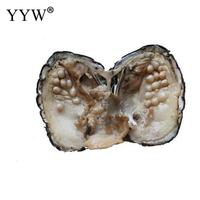 YYW Hot Sale Jewelry 5 7mm Randomly Color Shaped Approx 25 pieces in Natural Freshwater Cultured Love Wish Shell Pearl Oyster