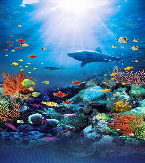 Coral Reef Background: 8x8FT Under Sea Park Shark Bruce Coral Reef Rocks Sunshine