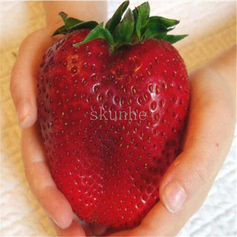 100 Pcs Langka Pusaka Super Raksasa Jepang Merah Strawberry Organik Bonsai, Sweet Candy Fruit Gratis Pengiriman