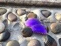 Новый Фиолетовый Цвет Замены Поляризованные Линзы для Джульетта Солнцезащитные Очки Oakley с Бесплатным Отвертки