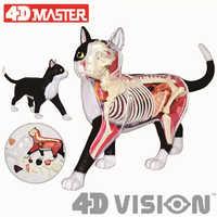 4D black and white cat Intelligence Assembling Toy Animal Organ Anatomy Model Medical Teaching DIY Popular Science Appliances