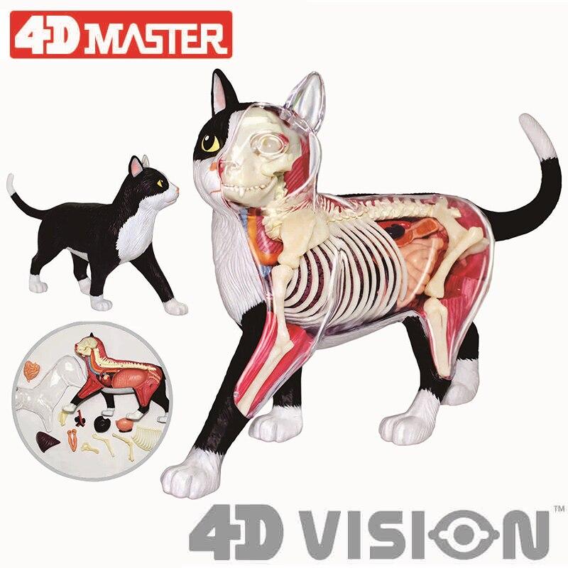 4d preto e branco gato inteligência montagem brinquedo órgão animal anatomia modelo de ensino médico diy popular ciência aparelhos