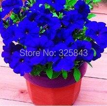 Бесплатная доставка Morning glory семена раздраженно семена балкон бонсай цветок петуния set-200 шт.