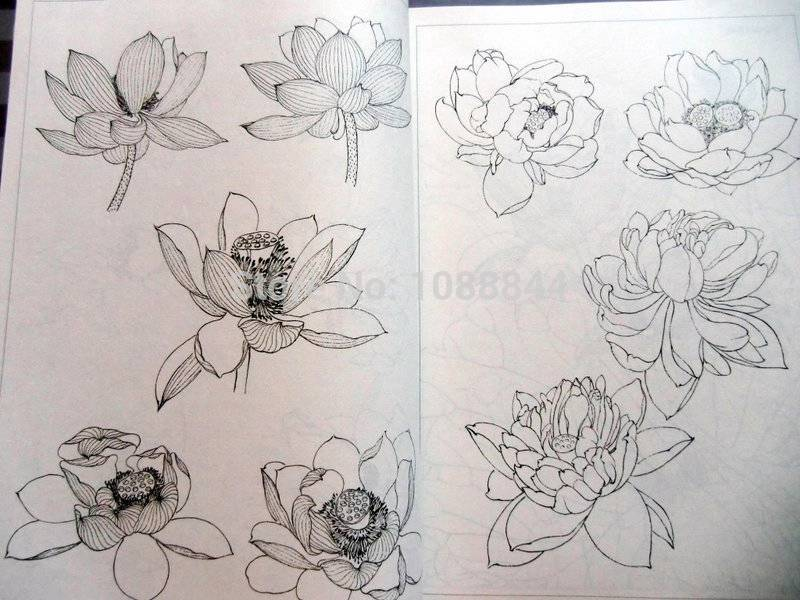 Free Shipping Lotus Flower Line Drawing Chinese Painting Tattoo