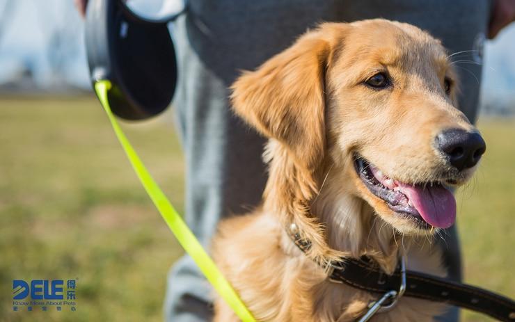 2015 BEST Sale Pet Dog Leash Retractable Collar Leads Products Harness Dele Automatic Cat Chain Collars Lead 25kg 30kg 40kg