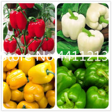 100 pcs Mixed Yellow Puple Red Green White Mix Sweet Bell Hot Pepper bonsai Vegetables Paprika, Bonsai Plant for Home Garden(China)