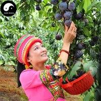 Buy Real Purple Prunus Salicina Fruit Tree Seeds 20pcs Plant Black Plum Fruit Grow Chinese Li Zi Tree
