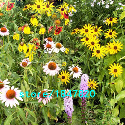 GGG Hot Selling 100 Pieces Wildflowers Combination Seeds Perennial Flower Planting Mixed Wildflower Seeds Aromatic Pleasant