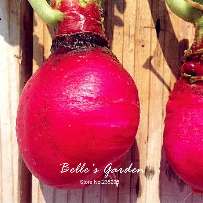 100pcs Hot Selling Classic Round Early Scarlet Globe Radish Seeds Oganic Red Radish Home Garden Fruit Vegetable Seeds