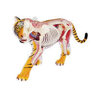 4D MASTER Educational Assembled Toy Animal Tiger Anatomy Of The Organ PVC Action Figure Medical Teaching Model Toy X1077