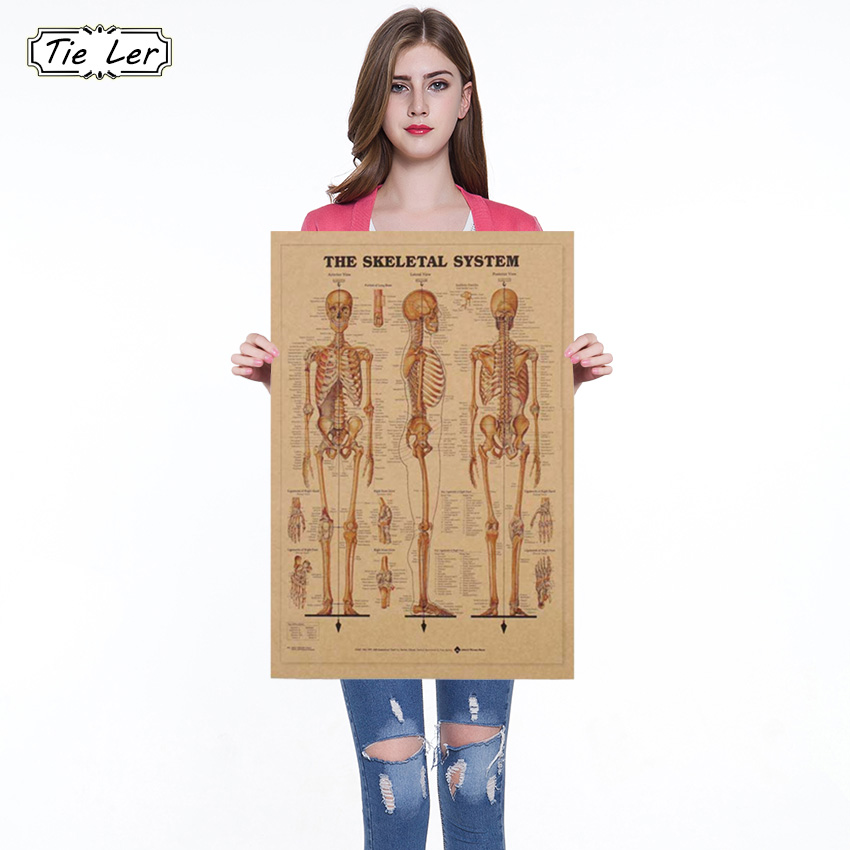 1pc The Skeleton Of The Body Structure Nervous System Poster Bar