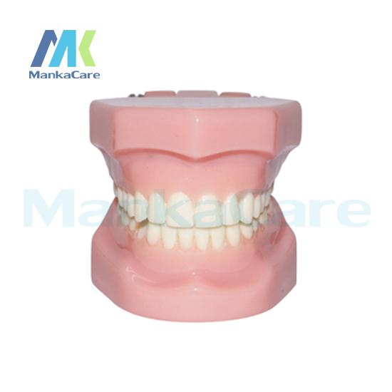 Manka Cuidar-28 pcs Dente, Modelo Sem suporte ortodôntico Oral Modelo Dente Dentes Modelo