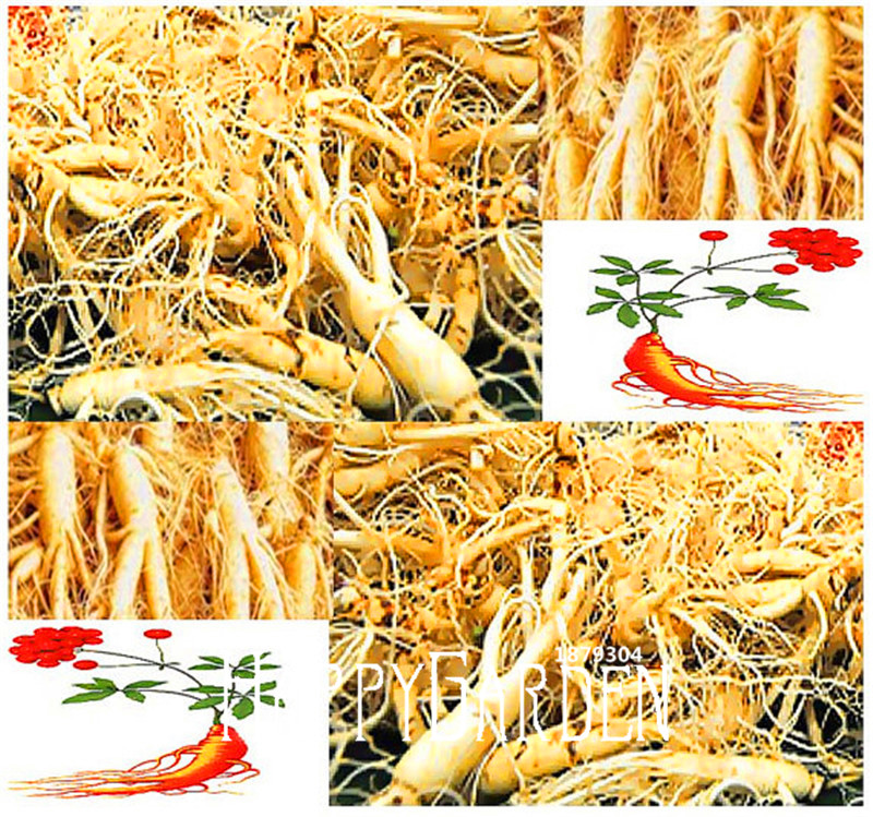 100 Seeds A Pack New Seeds 2016!Chinese Ginseng , Panax ginseng Seeds , Potted Bonsai Plant Flower Seeds for Home Garden