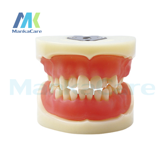 Manka Care - Physician certification model Oral Model Teeth Tooth Model цена